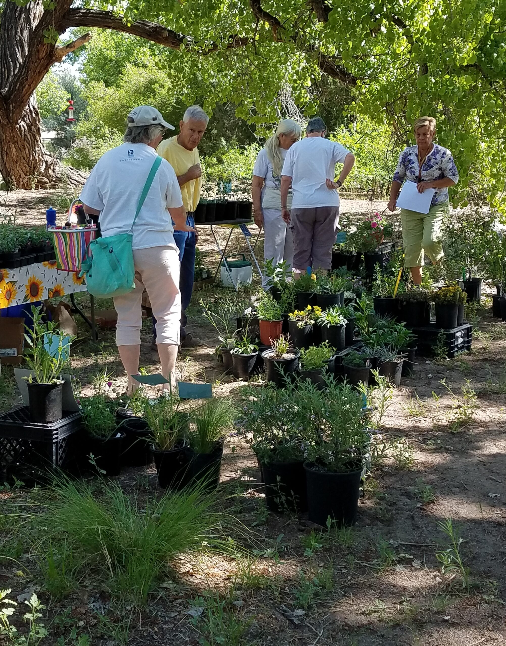 Plant sales at Herbfest.