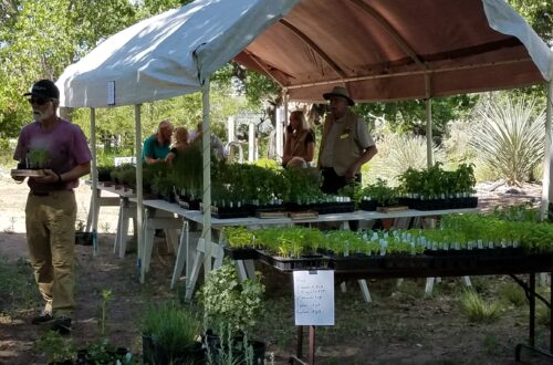 Herb sales at Herbfest.