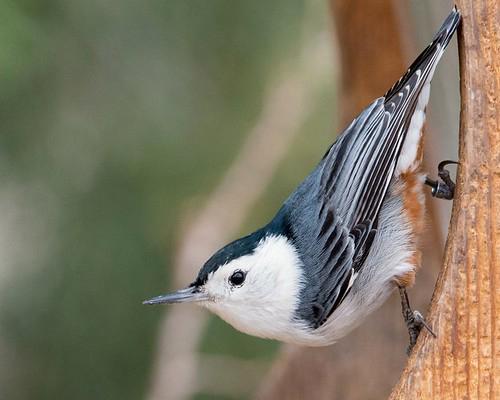 Bird in a window.