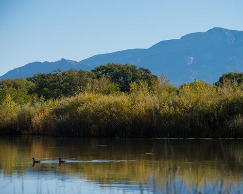 Wetland pond.